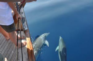 delfini sulla prua in navigazione alle eolie